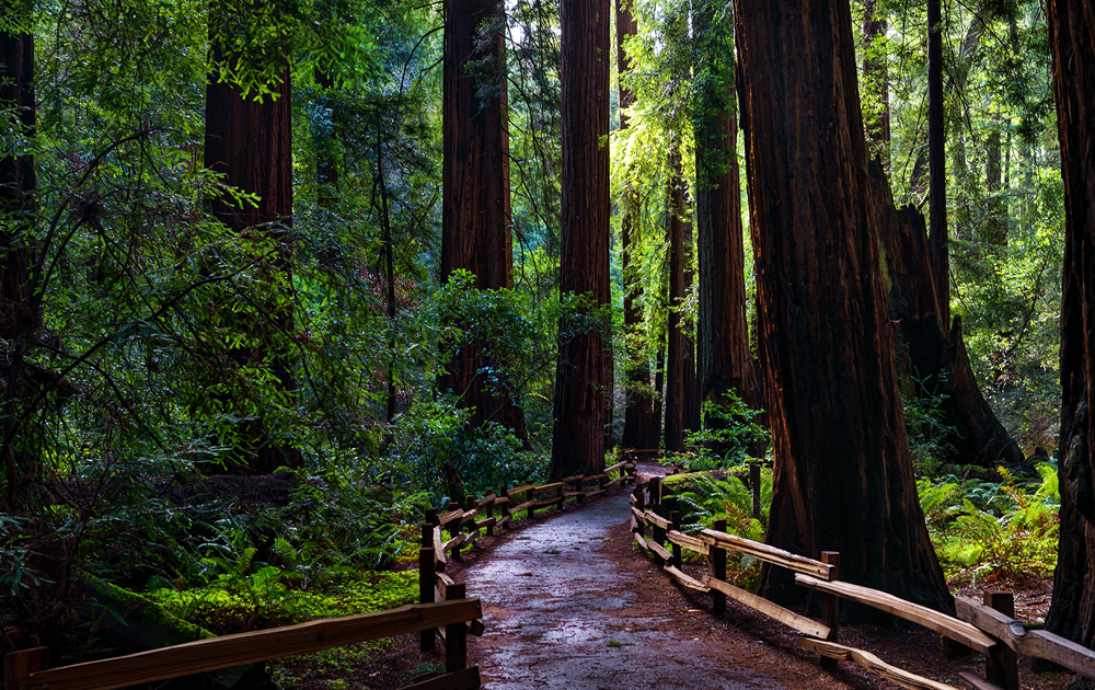 Muir Woods, California (Photo: Darvin Atkeson)